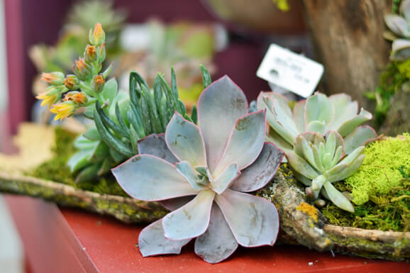 Make and Take Succulent Container