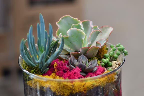 Make and Take Succulent Workshop