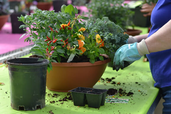 Fall Container Gardening Class