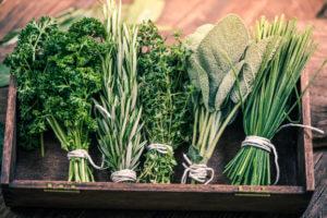 Herb Garden Workshop