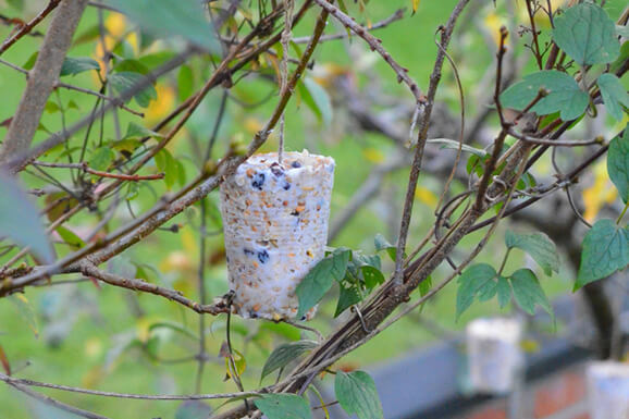 Kids Make & Take Suet Bird Feeder