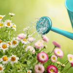 Plant Watering Tips
