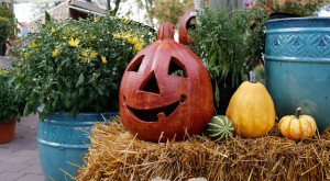 Fall Specials at Parkview Nursery
