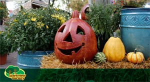 Fall Specials at Parkview