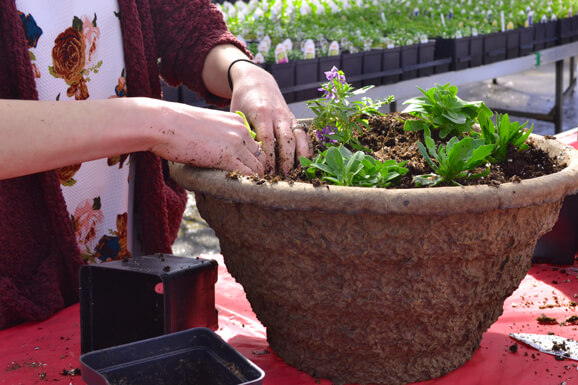 Make & Take Container Gardening