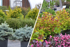 Planting for Year Round Appeal
