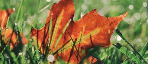 October Gardening Checklist