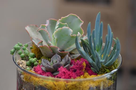 Succulents and Terrariums Workshop