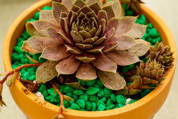 Succulent Make & Take
