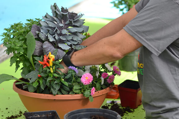 Fall Container Gardening Workshop