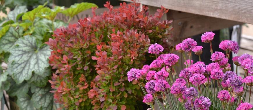 How To Dividing Perennials Parkview Nursery