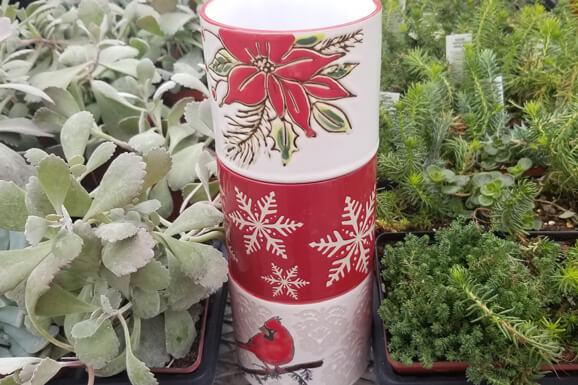 Winter Succulent Make & Take