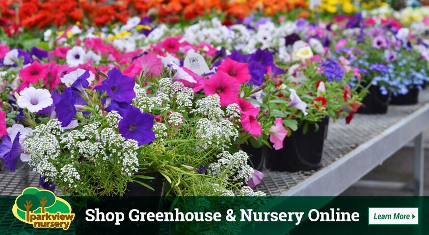 Plant Nursery Greenhouse Parkview Nursery Aberdeen