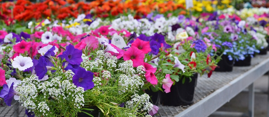 Order Greenhouse Nursery Products Online Parkview Nursery