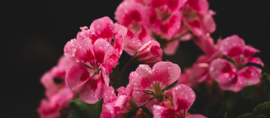 Late Spring Gardening