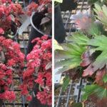 Unique fall perennials to plant